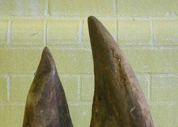 or tambo rhino horn